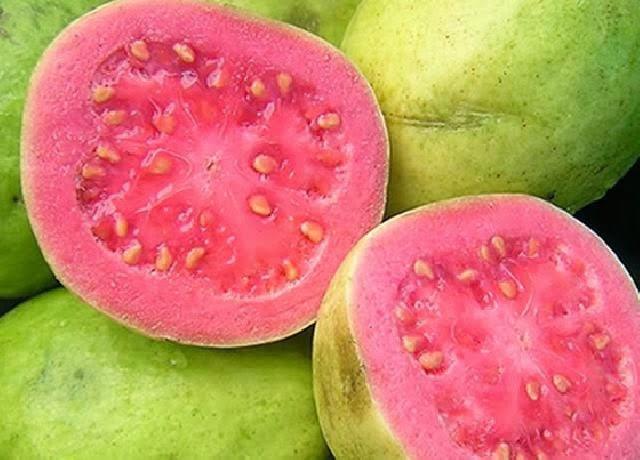 Sempre ao Lado do Produtor Rural&quot;.: Os <b>Benefícios</b> da Fruta <b>Goiaba</b>. 2014