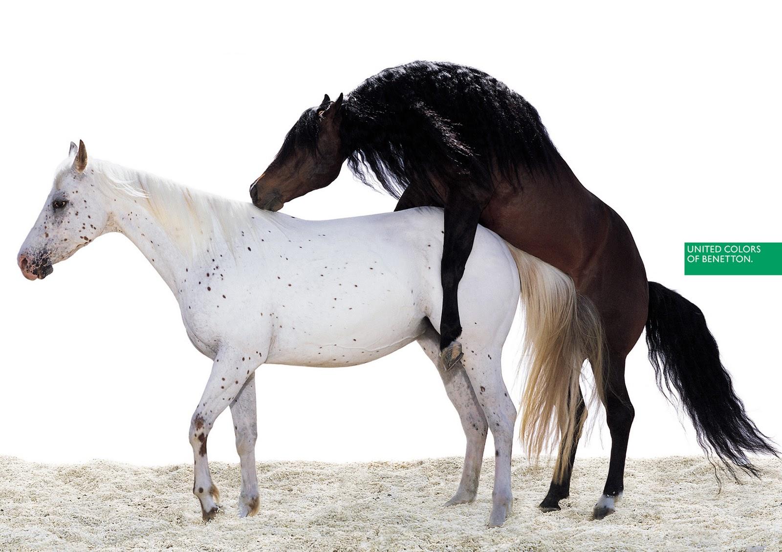 http://2.bp.blogspot.com/-9c5W_-sq7u0/TyLl2_jHDZI/AAAAAAAABl4/HGW_5d1Np3g/s1600/benetton-horse.jpg