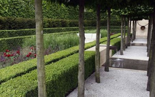 The Laurent-Perrier Garden' at Chelsea Flower Show