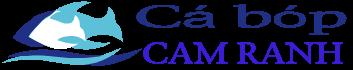 Cá Bóp Cam Ranh | Sạch | Không hóa chất
