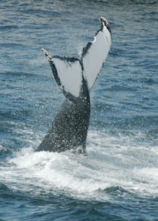 Naturalists aboard Captain John Whale Watching and Fishing Tours ...