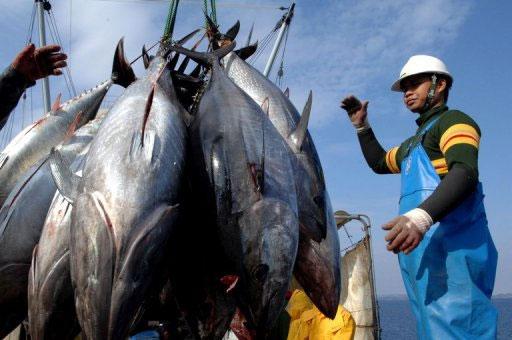 Đánh bắt cá ngừ đại dương