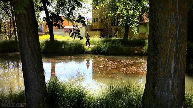 Canal Palencia, 2013 Abbé Nozal