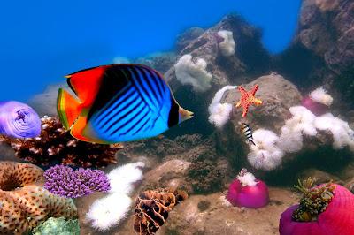 Vista del fondo del océano con corales arrecifes y peces de colores