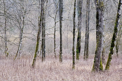 Photo of a forest without snow in winter