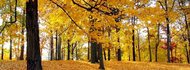 facebook sonbahar kapak resimleri+%252811%2529 Facebook Zaman Tüneli Sonbahar Manzara Kapak Resimleri