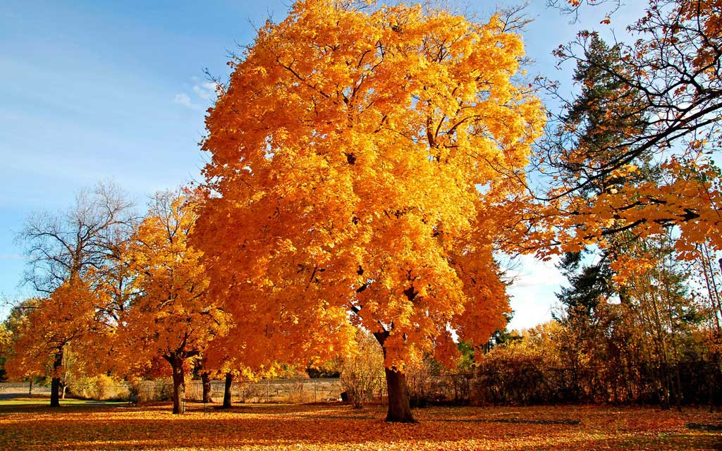 Beauty Yellow Tree Nature Background Wallpapers Here You Can See Or Download Picture Of