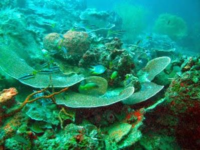 Wisata Pulau Bulupoloe Luwu Timur