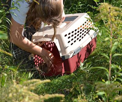 Heidi Holman releases a rabbit.