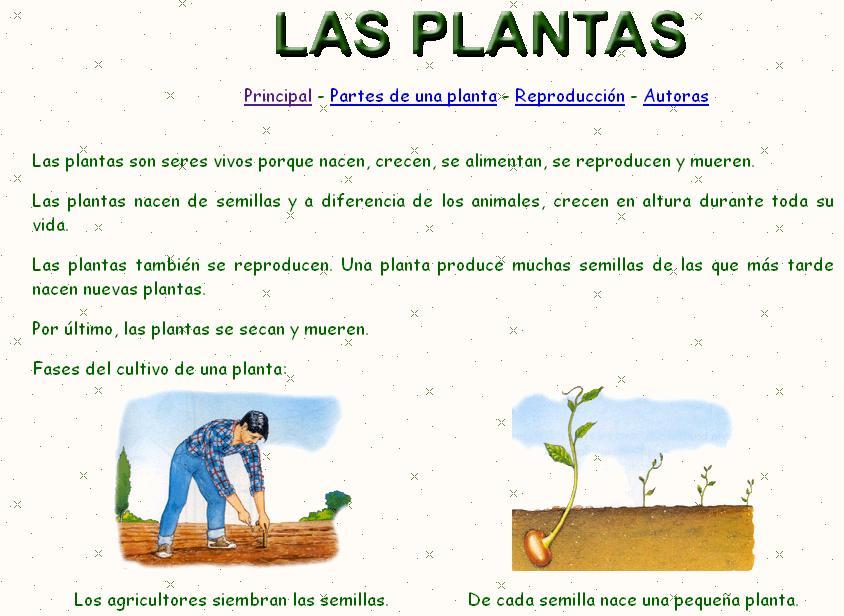 8 plantas para un drenaje natural - Blog PromoFarma