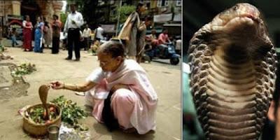 Perempuan India Menikahi Raja Kobra