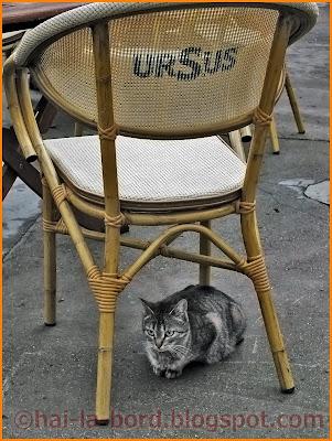 pisica sub scaun ursus casa lorabella baile herculane