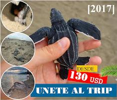 Tours de Observación de Tortugas