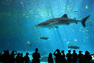 List of Public Aquariums by State (Link)