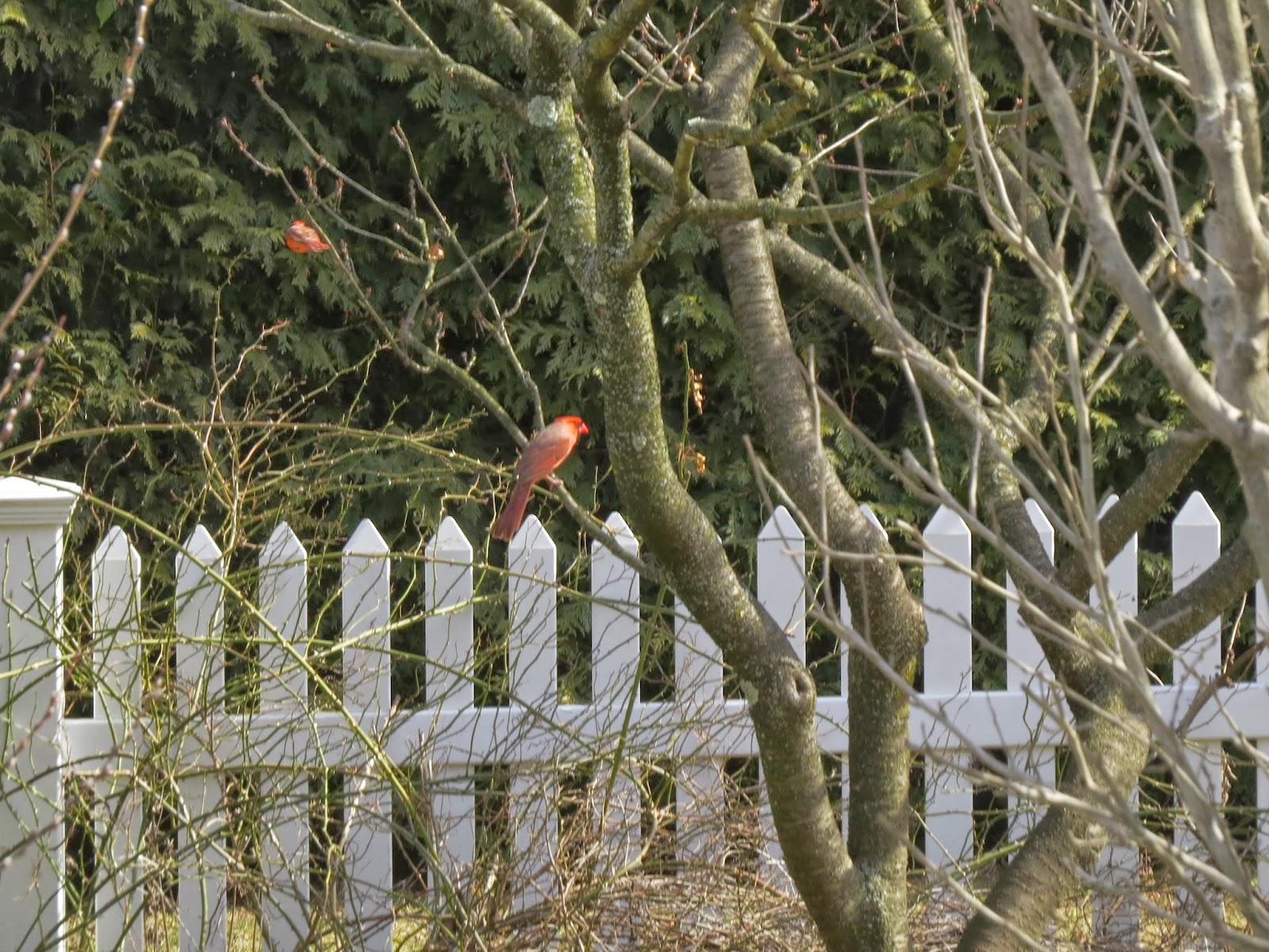Mr.-&-Mr.-Cardinal