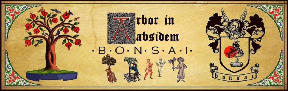 Arbor in absidem - Bonsai