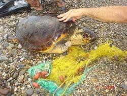Αίσιο τέλος για απεγκλωβισμό θαλάσσιας χελώνα στο Λιμάνι!