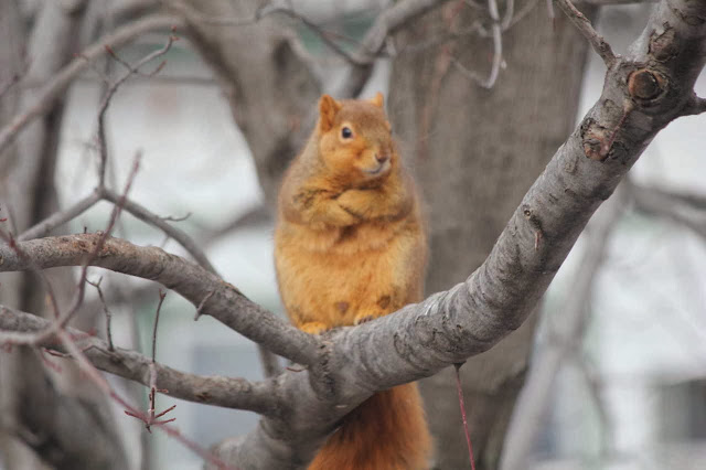 Funny animals of the week - 20 December 2013 (40 pics), fat squirrel stands on tree branch