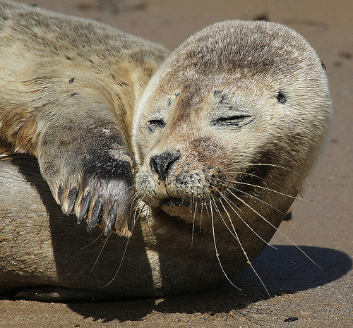 funny common seal of the company online news icon