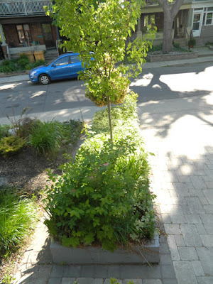 The Pocket garden renovation before by Paul Jung Gardening Services Toronto