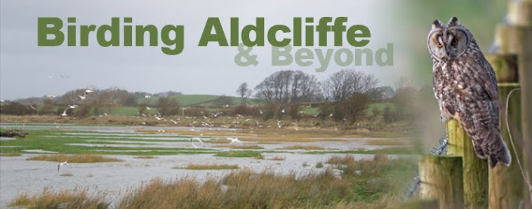 Birding Aldcliffe: Birdwatching the Lune Estuary, Morecambe Bay, Lancs