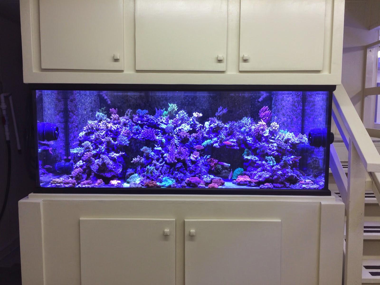 Diver's Den coral display aquarium