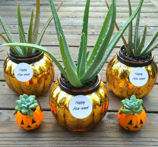 Fun Halloween Hostess Gifts with Succulents | www.jacolynmurphy.com