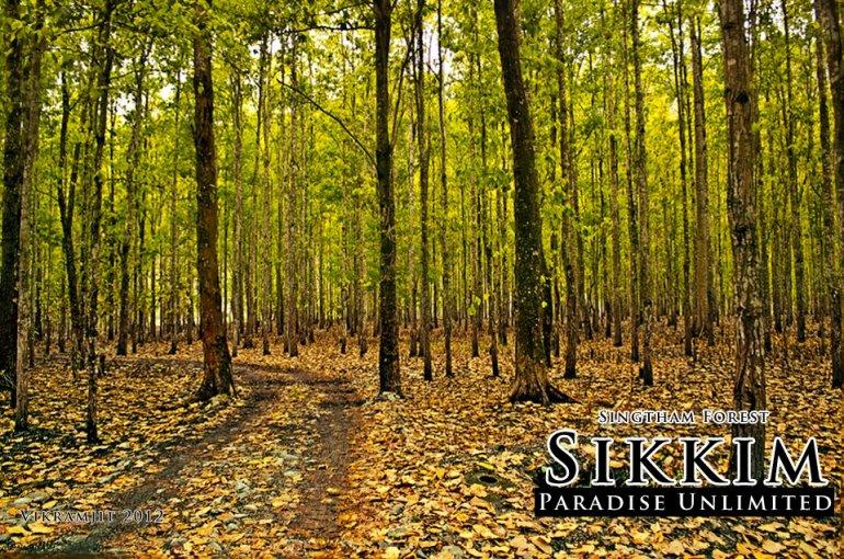 Singtham forest, Sikkim (photo - Vikramjit Kakati)