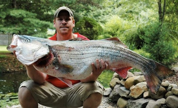 That necessary. striped bass record new york never impossible