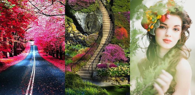 fleurs, escalier, canada, arbres, rouge, rose, vert