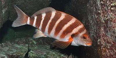 Laut Hangat Populasi Jenis Ikan Semakin Berkurang