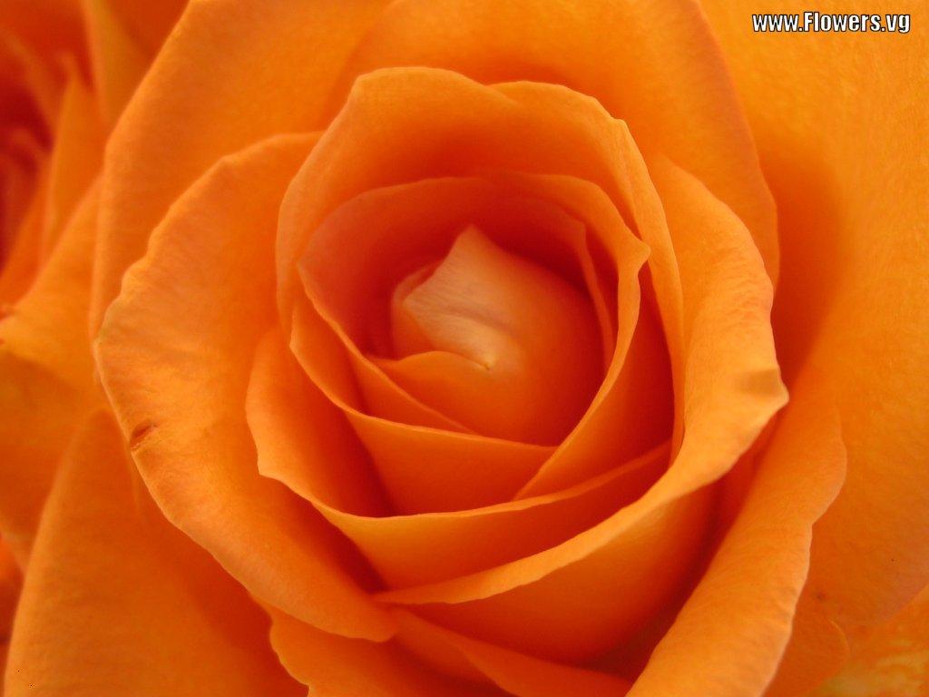 ألوان الطبيعة في الطبيعة الرقيقة orange-flower-3-7620
