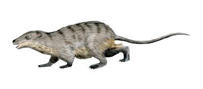 mamiferos del cretaceo Eomaia
