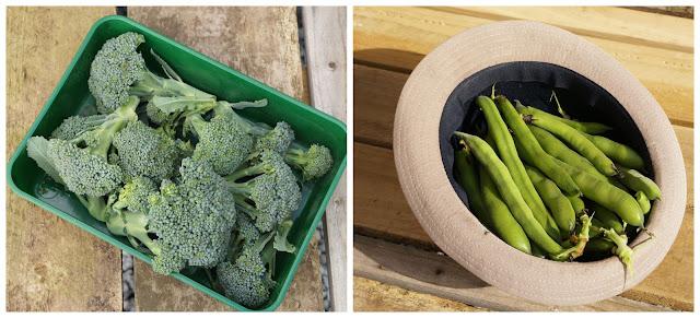 a little harvest - 'growourown.blogspot.com' ~ an allotment blog
