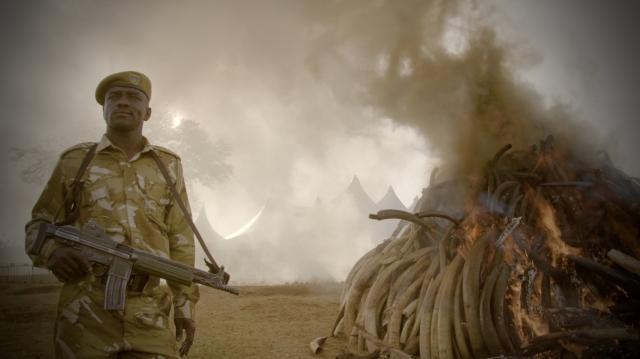 Hình ảnh phim Kẻ Trộm Ngà Voi