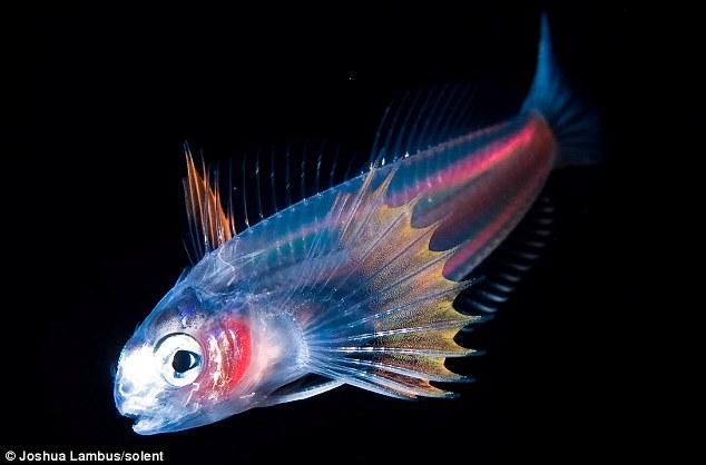 Foto-foto 'gaya X-Ray' haiwan laut di waktu malam