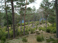 Bosc de la Socarrada