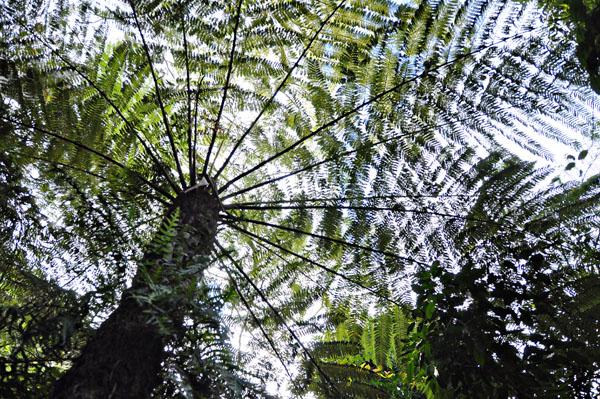 palm tree at Jamison valleu