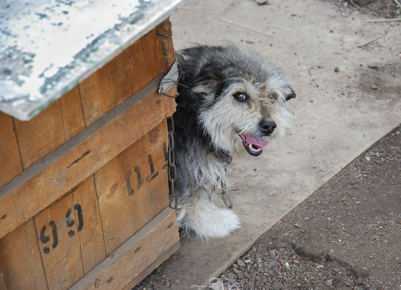 A smiling dog in its home