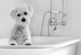 Como bañar a tu perro