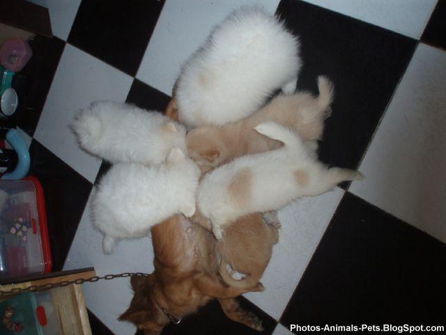 http://2.bp.blogspot.com/-9jFtO57G0JE/TY3Z-dftcVI/AAAAAAAAAPE/A0wpWJXEUL0/s1600/Photos%2B-puppy%2Bdogs_0001.jpg