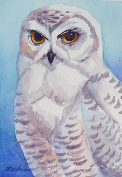 Snowy owl - one of my bird paintings