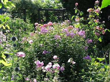 tuin in bloei