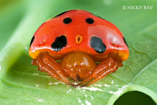下腹部にミラーボールの様なリフレクションを持つ蜘蛛、葉や枝にカモフラージュする昆虫、人間を殺害する程の毒を持つ蜘蛛達の不思議なデザイン。