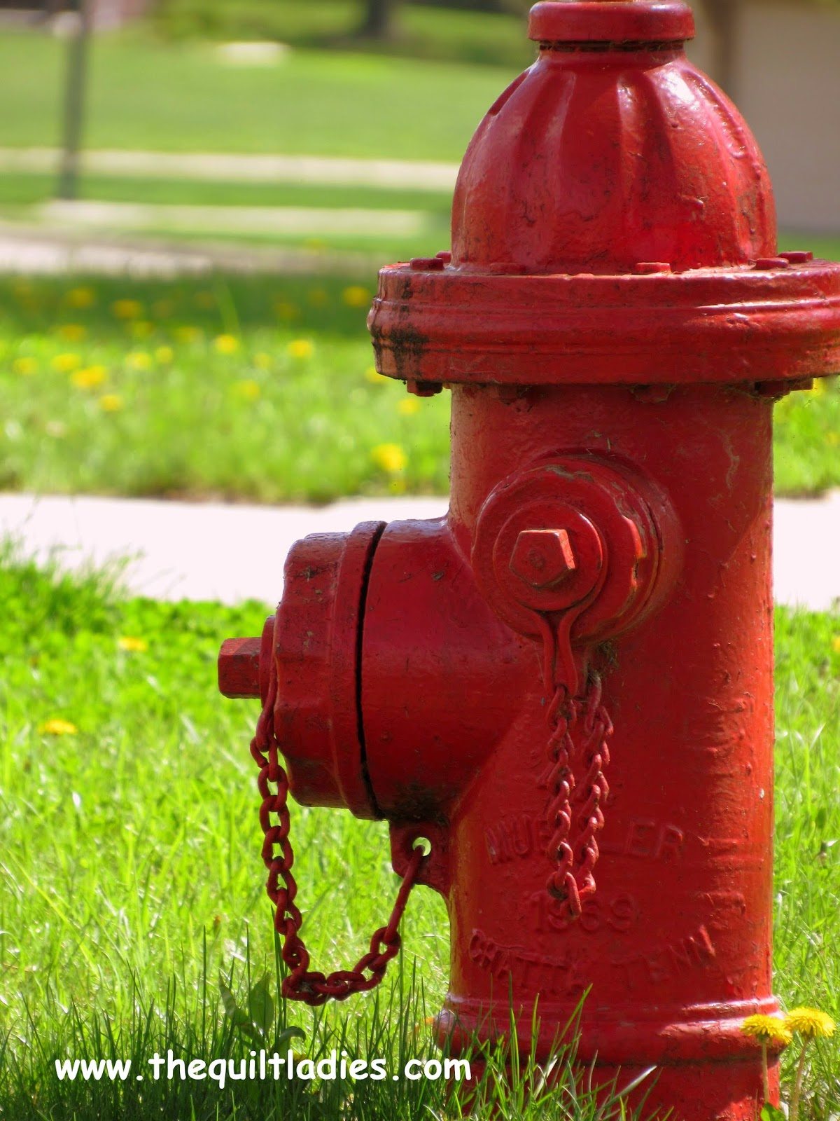 Red Water Hydrant Photo