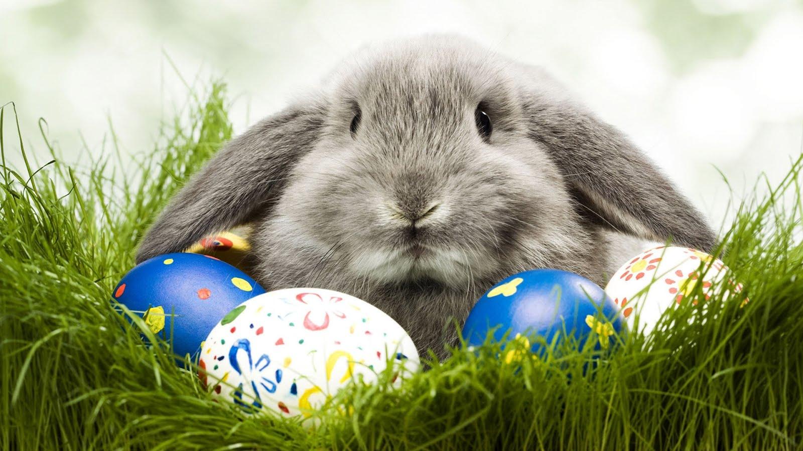 Великденско зайче, HD Wallpaper