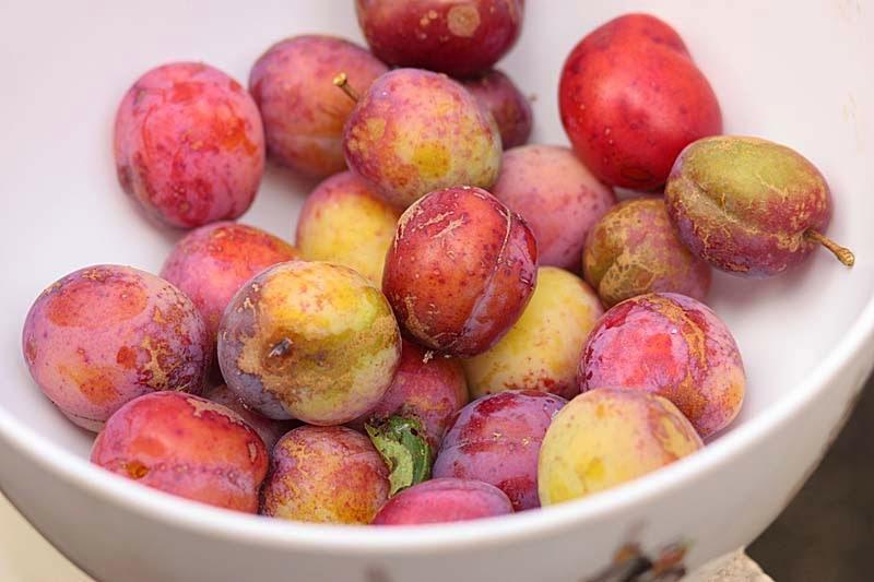 plum, plum
