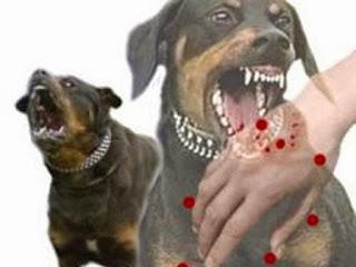 APA ITU PENYAKIT ANJING GILA,gila anjing,rabies,negeri yang diserang penyakit anjing gila