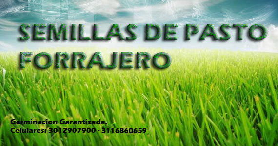 Semillas de Pasto Forrajero
