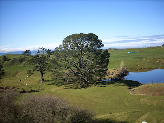Party Tree at Hobbiton, New Zealand - own image